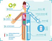 Human Body Anatomy Infographic Flat Design on Blue Background