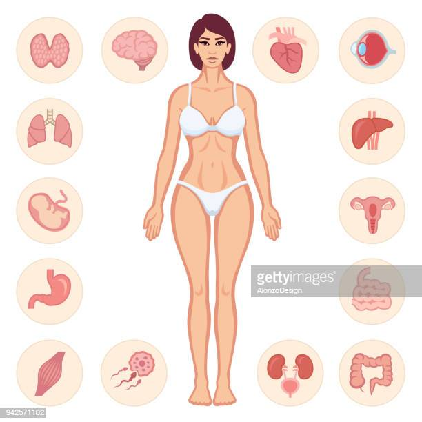 human body anatomy - human intestine stock illustrations