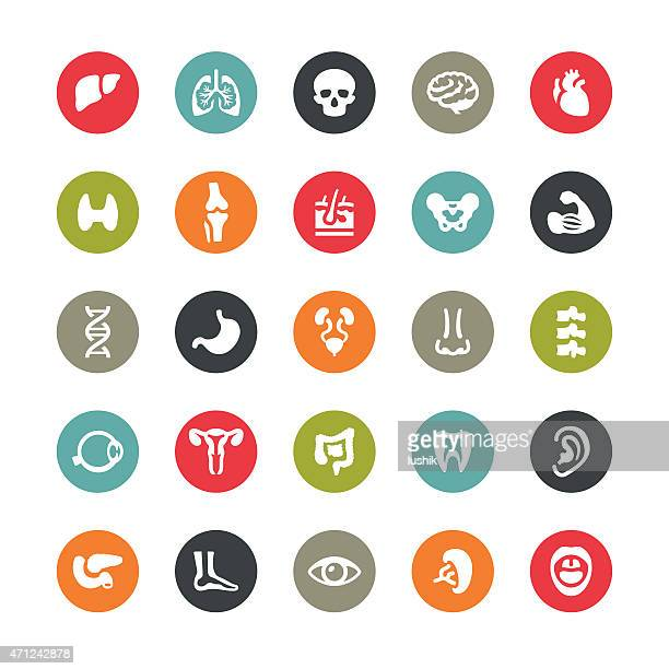 Human body and internal organ related vector icons / Ringico series
