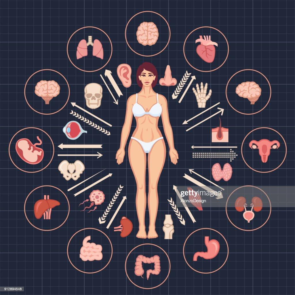 Human body and internal organs : stock illustration