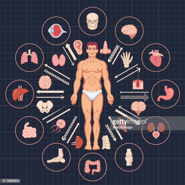 human body and organs - small intestine stock illustrations