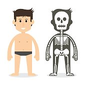 human body and skeletal system ( flat design )