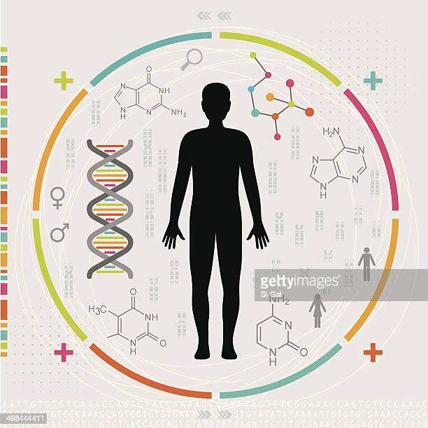 Human Body - DNA, genes and Chromosomes