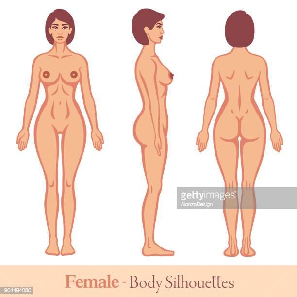ilustraciones, imágenes clip art, dibujos animados e iconos de stock de cuerpo humano. mujer - modelos del cuerpo humano