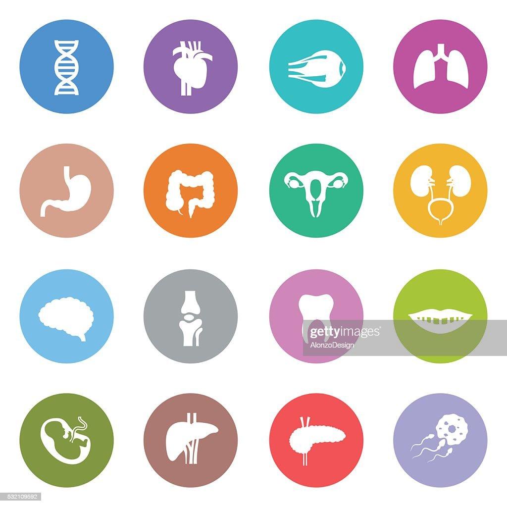 Corpo humano Conjunto de ícones : Ilustração