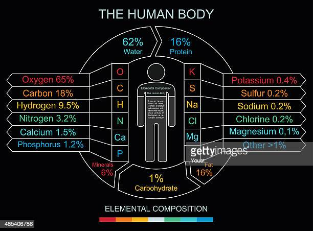 Human Body Infographics in Linear Style
