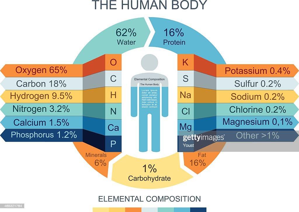 Human Body Infographics : stock illustration