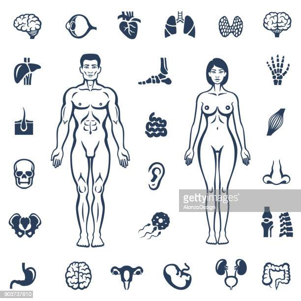 Human Body. Internal Organ Icons