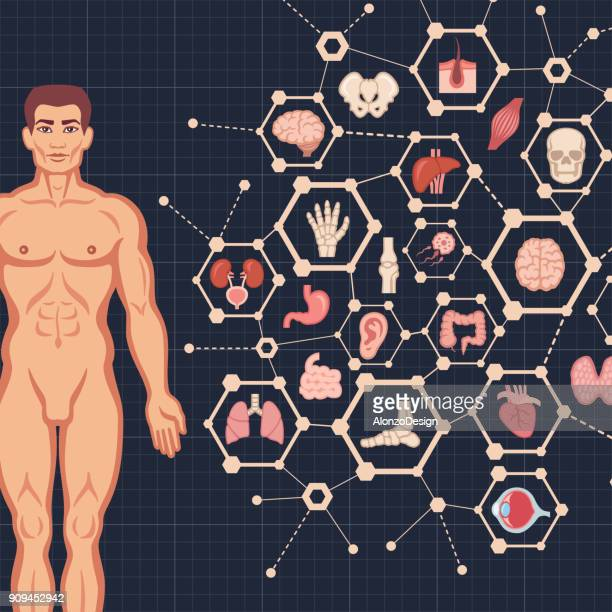 human body. medical icons design - bladder stock illustrations, clip art, cartoons, & icons