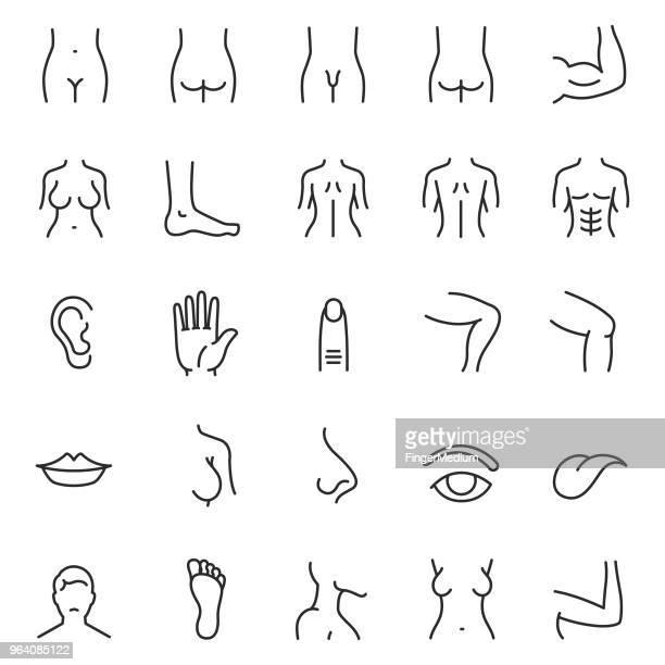 ilustraciones, imágenes clip art, dibujos animados e iconos de stock de conjunto de iconos de parte de cuerpo humano - parte del cuerpo humano