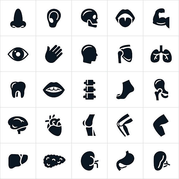 human body parts icons - human body part stock illustrations