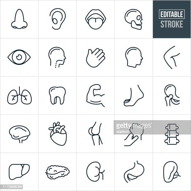 human body parts thin line icons - editable stroke - human body part stock illustrations