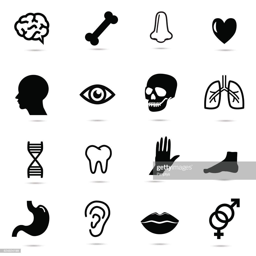 Human body parts.