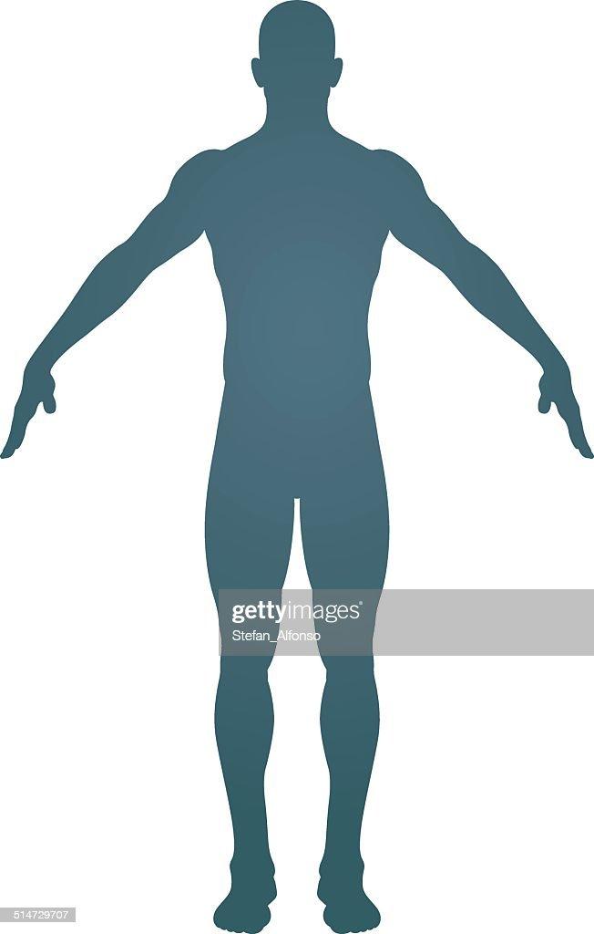 Human body silhouette : stock illustration