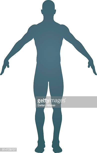 human body silhouette - the human body stock illustrations, clip art, cartoons, & icons
