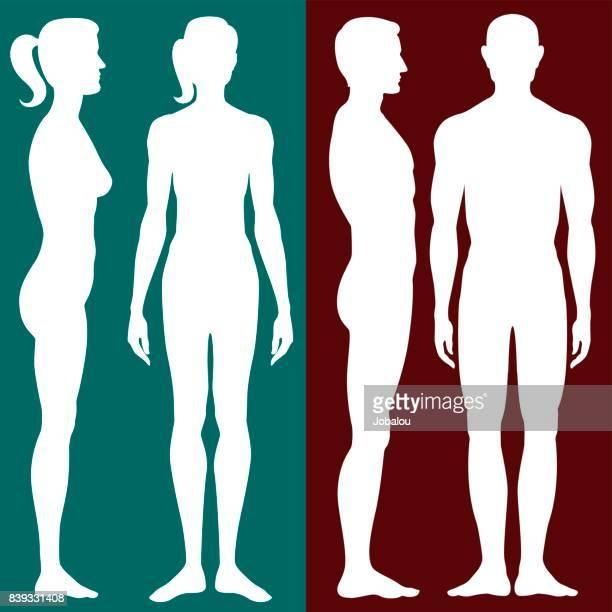 bildbanksillustrationer, clip art samt tecknat material och ikoner med mänskliga kroppen siluett - naket