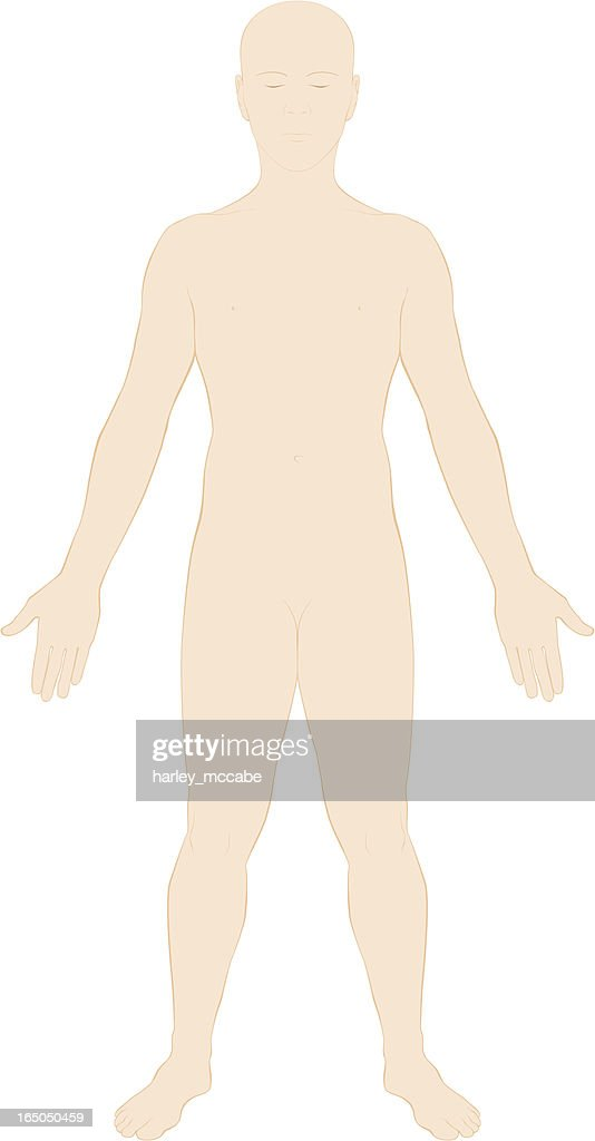 Human Body Surface Anatomy Colour Vector Art Getty Images