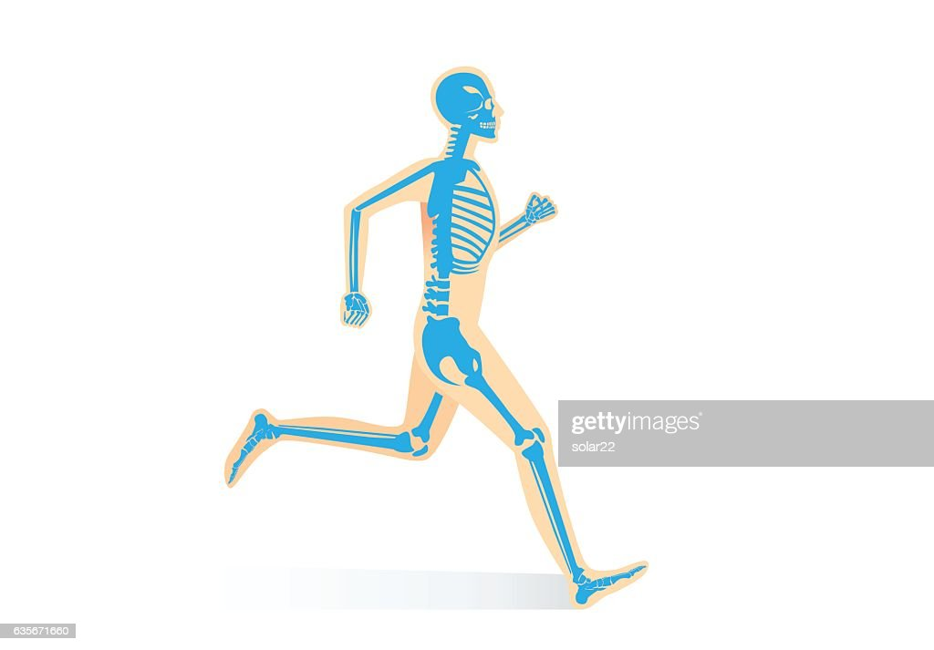 Human Bone Anatomy while run
