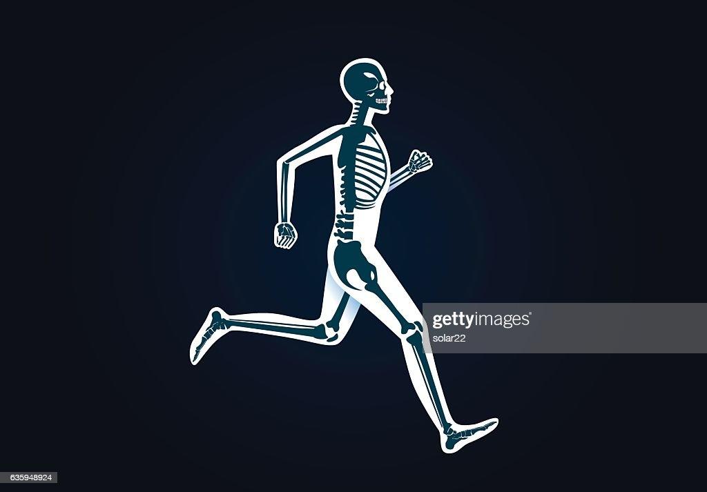 Human Bone Anatomy while run