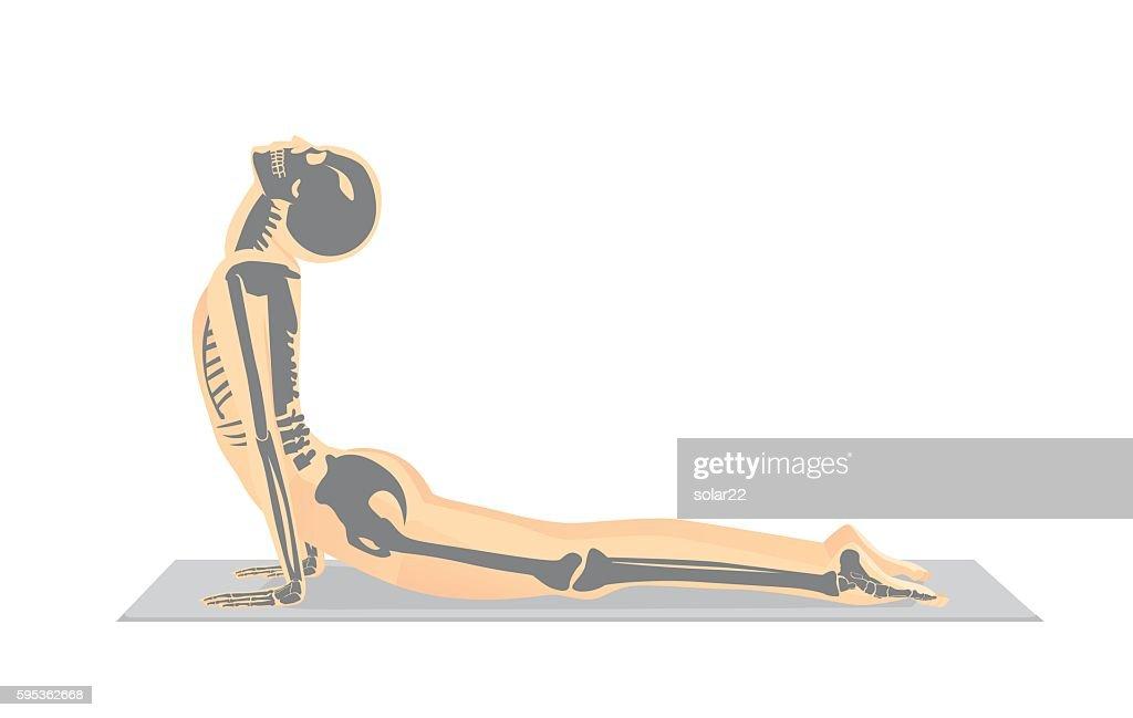 Human bone anatomy while Yoga workout.