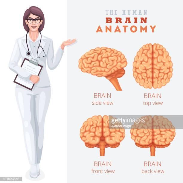 anatomie des menschlichen gehirns. medizinische poster. - vorderansicht stock-grafiken, -clipart, -cartoons und -symbole