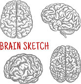 Human brain at different angles engraving sketches
