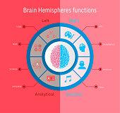 human brain hemispheres functional inforgraphic