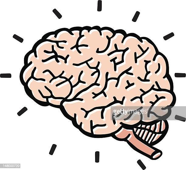human brain - frontal lobe stock illustrations, clip art, cartoons, & icons