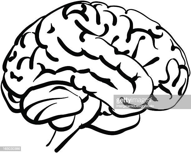 human brain - diencephalon stock illustrations, clip art, cartoons, & icons