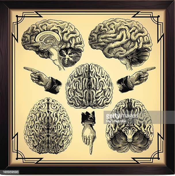 human brain - tissue anatomy stock illustrations, clip art, cartoons, & icons