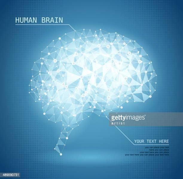 ilustrações, clipart, desenhos animados e ícones de cérebro humano - inteligência