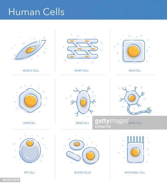 Human Cells Icons Set