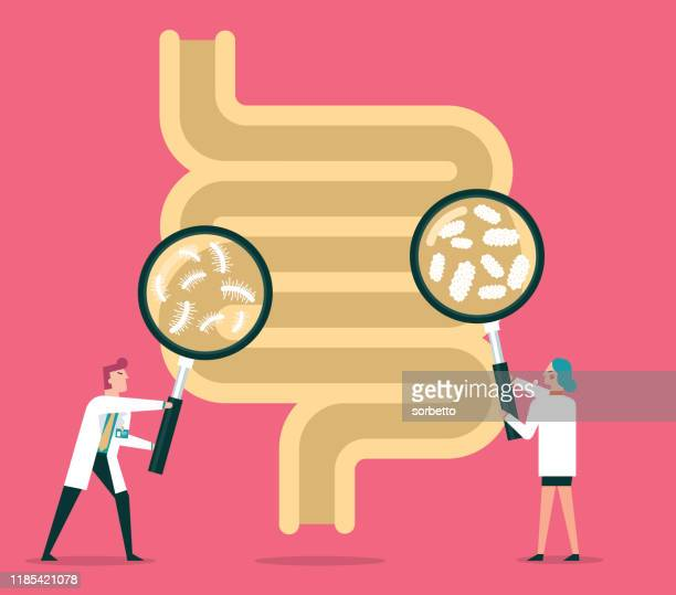 human digestive system - intestine stock illustrations