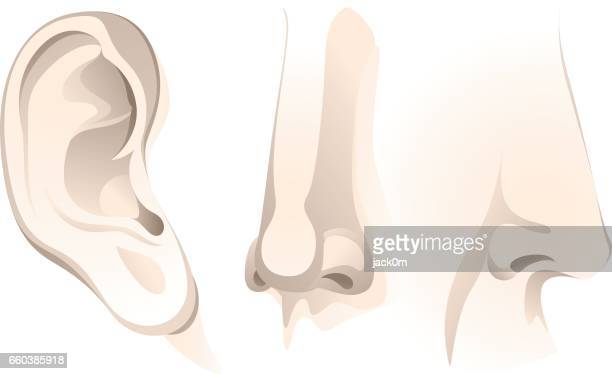 human ear and nose - human nose stock illustrations