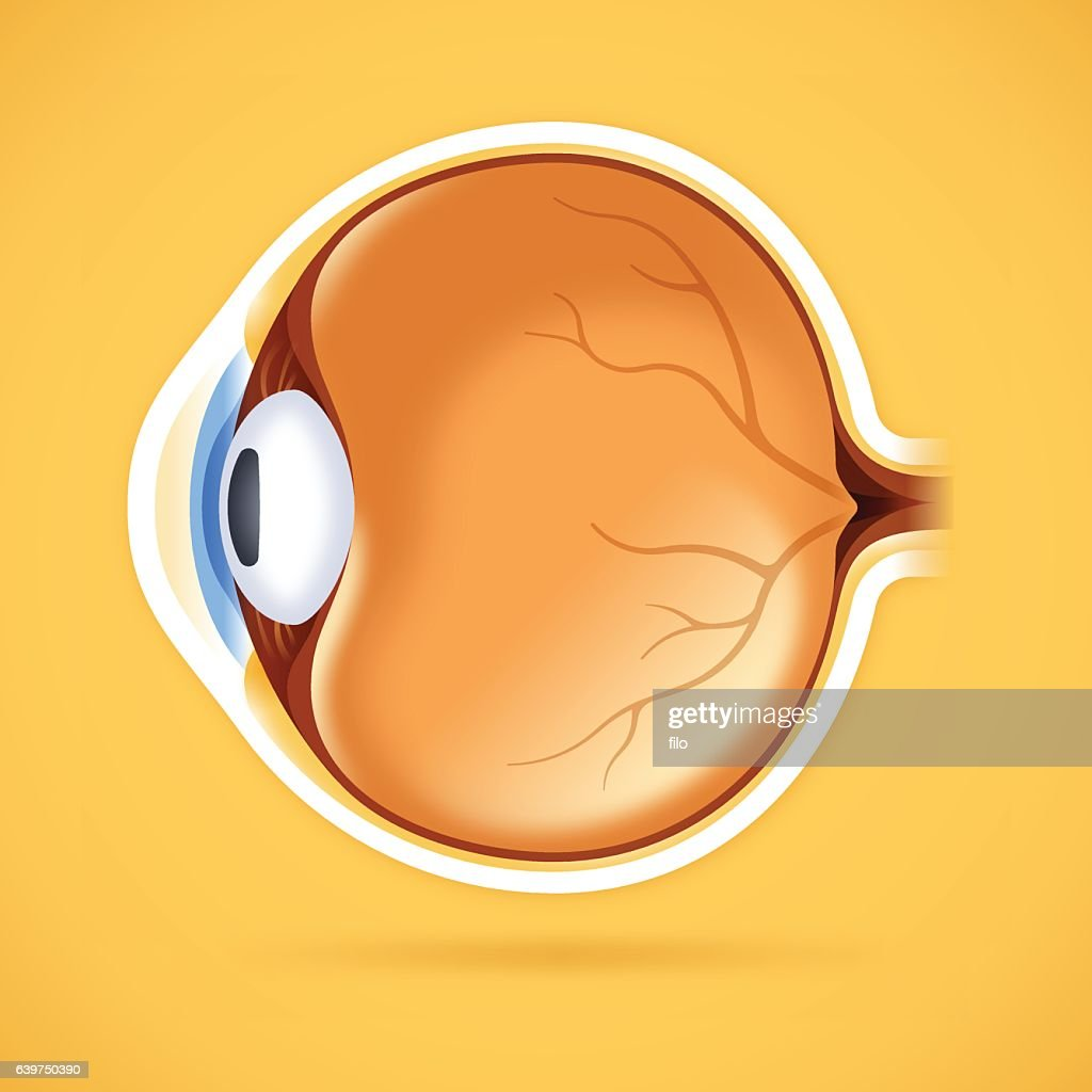 Human Eye Anatomical Structure : Ilustração