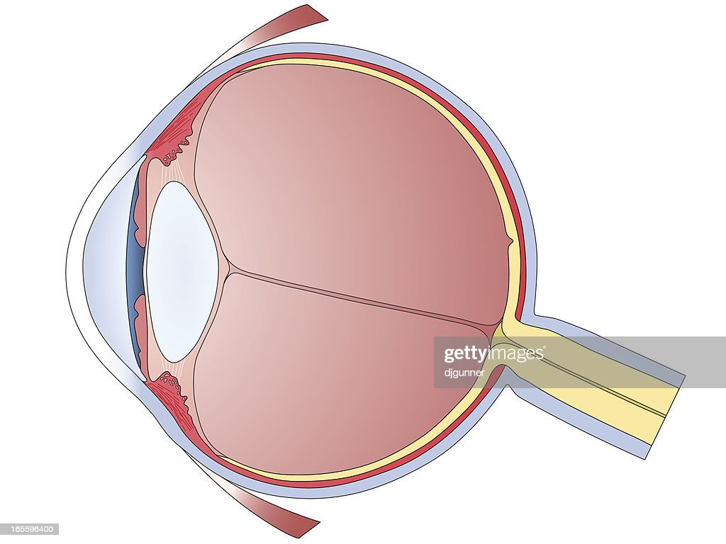 Human eye diagram vector art getty images human eye diagram vector art ccuart Choice Image