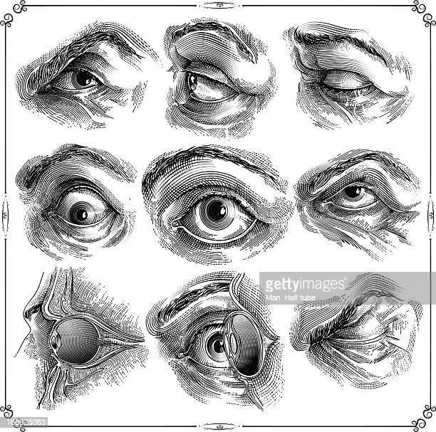 ilustraciones, imágenes clip art, dibujos animados e iconos de stock de ojo humano - monoimpresión