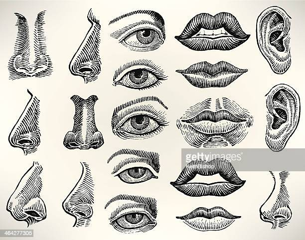 human features - eye, mouth, ear, nose - ear stock illustrations