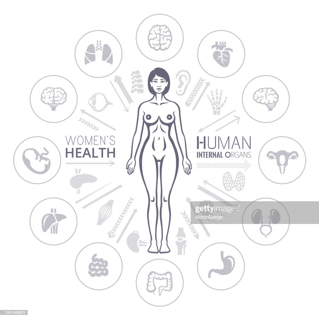Human Female Body And Internal Organs Vector Art Getty Images