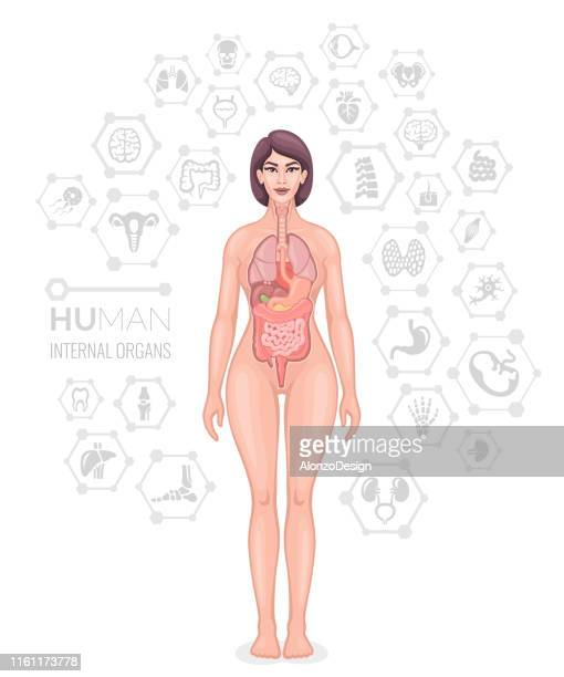 human female body vector. - human body part stock illustrations