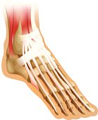 human foot