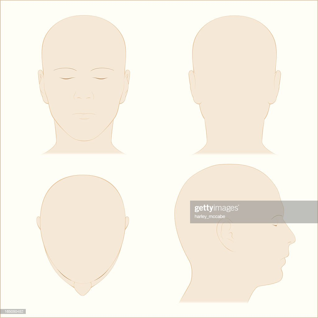 Human Head Surface Anatomy Colour Vector Art Getty Images