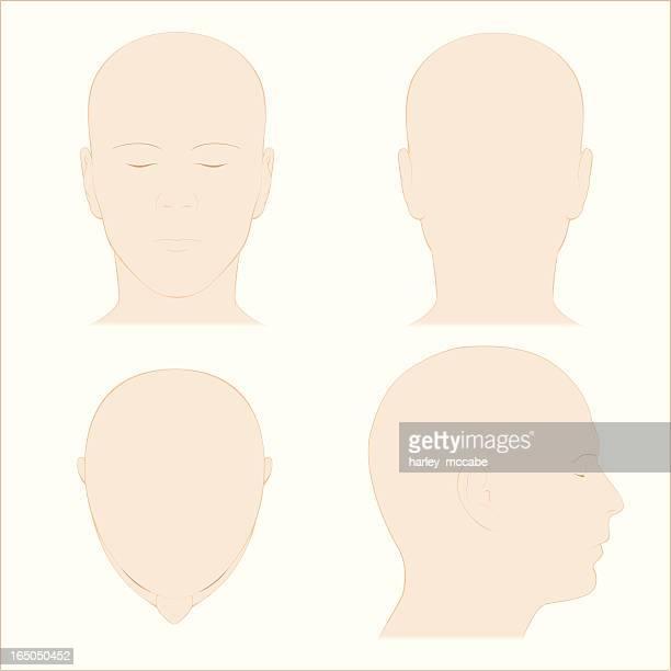 ilustrações, clipart, desenhos animados e ícones de cabeça humana superfície anatomia cores - cabeça humana