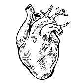 Human heart black line, tattoo, organ. Vector illustration.