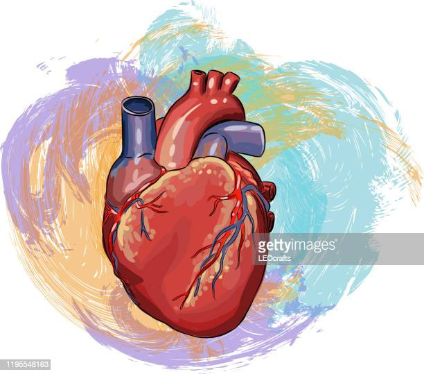 human heart drawing - human heart stock illustrations