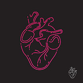 Human heart icon. Line design