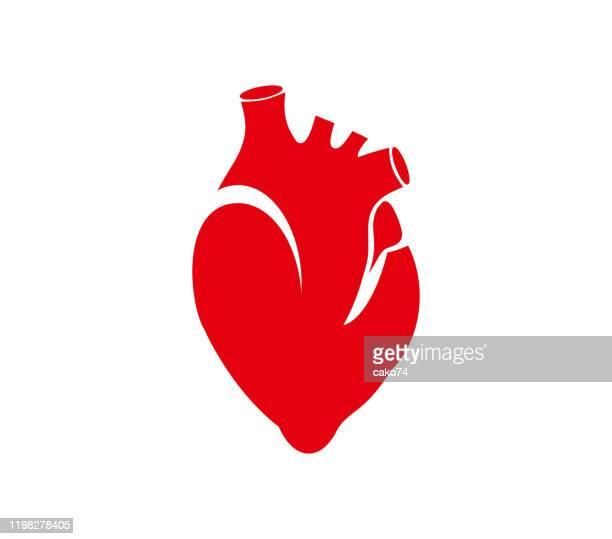 human heart icon stock illustration - human heart stock illustrations
