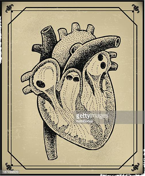 human heart - retro - coronary artery stock illustrations, clip art, cartoons, & icons