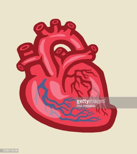 human heart - human heart beating stock illustrations