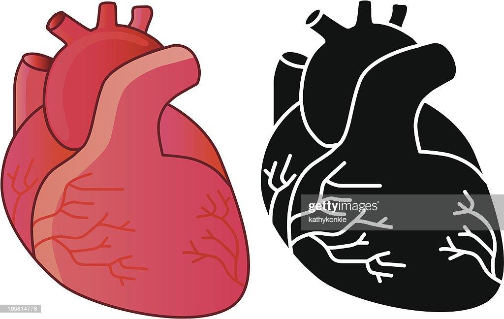 human heart stock illustrations and cartoons getty images rh gettyimages com Human Heart Clip Art human body heart cartoon